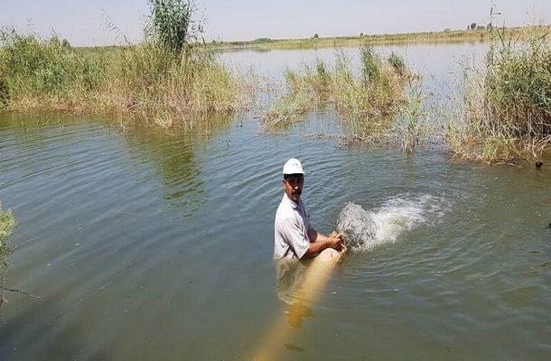رهاسازی چهار هزار قطعه بچه ماهی بومی در رودخانه شطیط شوشتر