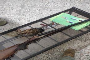 دستگیری شکارچیان درّاج در شوشتر