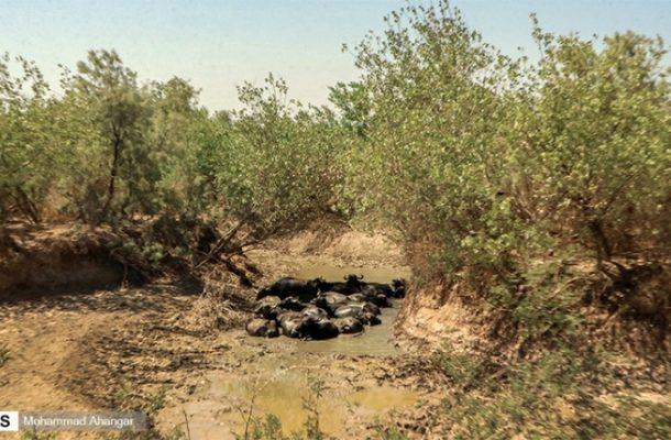 اختصاص۵۵۰ میلیارد ریال برای حل مشکل تنش آبی در خوزستان