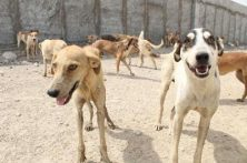 روند ساخت پناهگاه حیوانات بلاصاحب شوشتر تسریع میشود